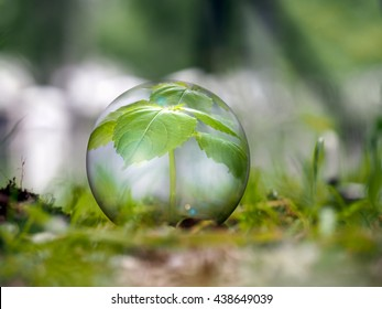 Environment concept. The plant is in a transparent ball in the grass