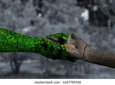 environment concept saft the earth concept: greengrass hand and dry soil hand isolated on white background.