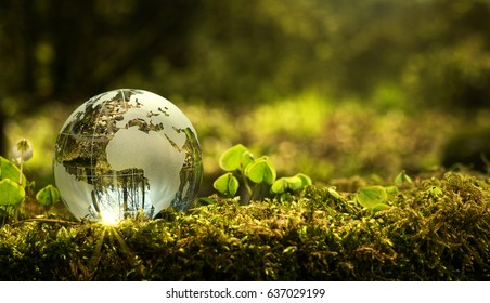 Environment conservation concept. Close up of glass globe in the forest with copy space - Shutterstock ID 637029199