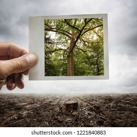 Environment conservation concept, male hand holding photograph with tree on it