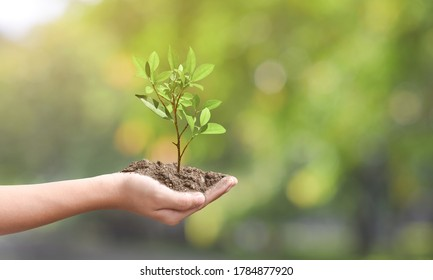Environment day concept. Young plant on the ground in hand over spring green nature background.