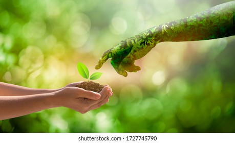 environment Earth Day Hands from nature.Girl hands holding trees growing on bokeh green background. Ecology and Nature concept.