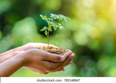 environment In the hands of trees growing seedlings. Bokeh green Background Female hand holding tree on nature field grass Forest conservation concept