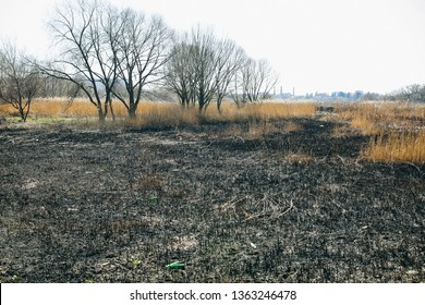 Environment pollution. Dry and burnt grass. Ecological disaster. Factories on background.