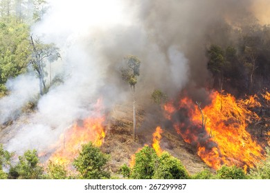 Environment pollution forest fire.