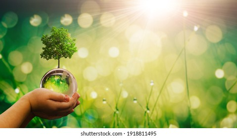 Environment, save clean planet, ecology concept. Child hands holding crystal earth globe and growing tree.  Earth Day banner with  copy space