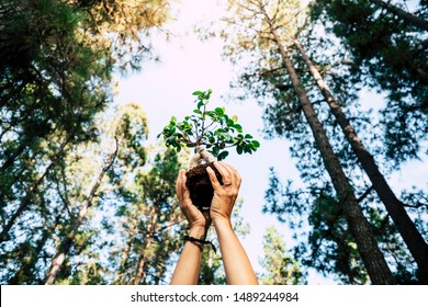 Environment and save the planet growing a tree concept with pair of human people hands showing up a little tree with natural forest around - earth's day celebration for future