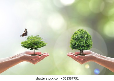 Environmental biodiversity in ecosystem, World forestry day concept with bio diversity in species of forest tree planting, saving biological life living in clean environment on volunteers hands