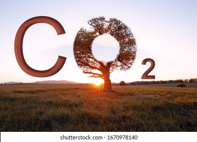 Environmental and CO2 loading. The Symbol tree and Meadow. Chemical Name Of Carbon Dioxide.