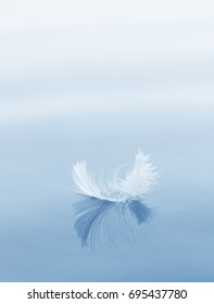 environmental concept, downy feather on a water surface, blue color tone