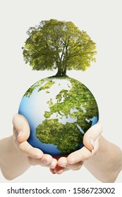 Environmental Concept As Hands Hold Globe With Growing Tree
