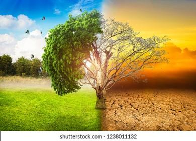 Environmental concepts, Live and dead big tree.