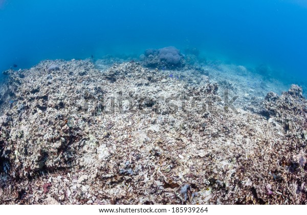 Environmental Damage - Global warming, ocean acidification and human impact are having a devastating effect on the planets' coral reef systems