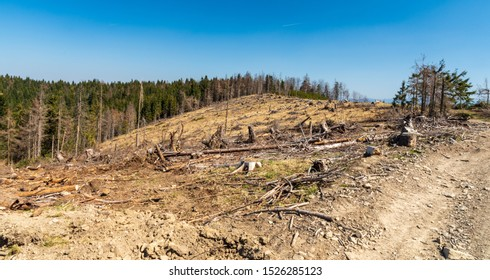 environmental disaster in Slovakia - huge forest glade on Chotarny kopec hill in Javorniky mountains