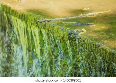 environmental disaster, toxic algal blooms