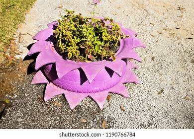 Environmental education with reuse of old painted pink tire that serves as flower gardener