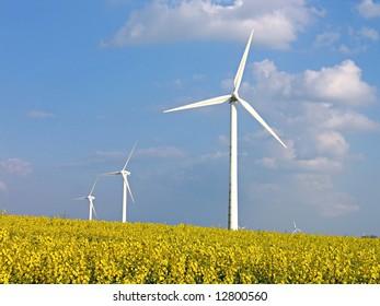 Environmental friendly alternative energy by wind turbines in rapeseed field
