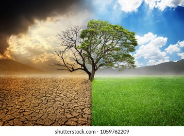 Environmental and global warming concepts, Live and dead big tree
