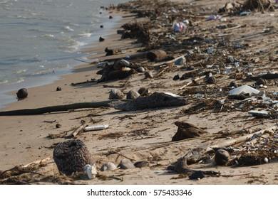 Environmental Pollution on the Beach in Thailand