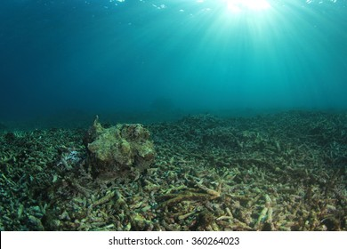 Environmental problem dead coral reef destroyed by global warming climate change pollution and overfishing