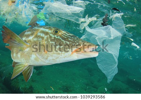 Environmental problem - plastic pollution and fish in ocean