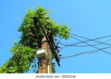 Environmental protection concept. Electric pole overgrown with ivy