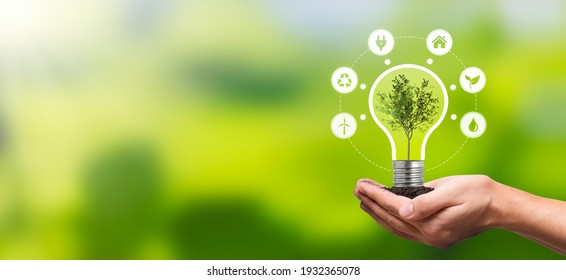 Environmental protection, renewable, sustainable energy sources. Plant growing in the bulb concept