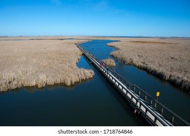Environmental View of Point Pelee National Park Marsh Boardwalk in Spring