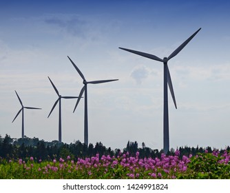 Eolian turbines in a row above a fireweed field Gaspesie Landscape