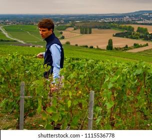 Epernay / France - Oct 6, 2016: Champagne Wine Guide Explaining Vine Trimming Near Dom Perignon's Gravesite in Hautvillers France