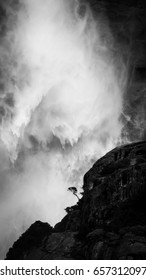 Epic lone tree in Yosemite falls with a cascade of water in the background