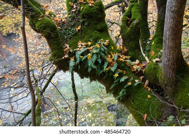 An epiphyte plants moss and fern growing on tree trunk. An epiphyte is a plant that grows harmlessly upon another plant and derives its moisture and nutrients from the air, rain