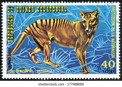 EQUATORIAL GUINEA - CIRCA 1974: Stamp printed in Guinea dedicated to endangered animals, shows Tasmanian Tiger, Australia, circa 1974