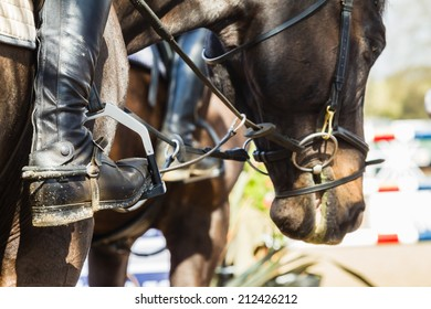 Equestrian Horses Boots accessories Equestrian Horse Show jumping close-up boots accesories riders horses
