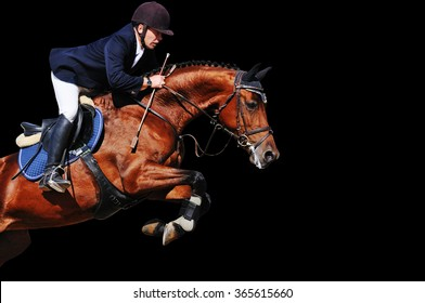 Equestrian: rider with bay horse in jumping show, isolated on black background