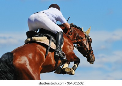 Equestrian: Rider on bay horse in jumping show