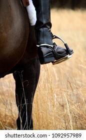An equestrian rider waits in a field