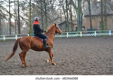 The equestrian sits on a horse of trakenensky breed. Poland, Kentshin