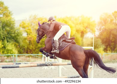 Equestrian sport background. Young sportswoman taking her course on Show jumping competition