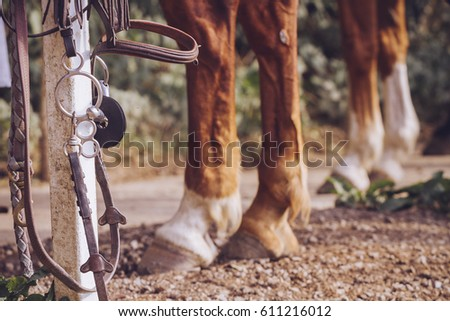 equestrian sport equipment