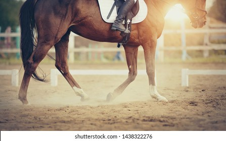 Equestrian sport. The leg of the rider in the stirrup, riding on a red horse. Dressage of horses in the arena.