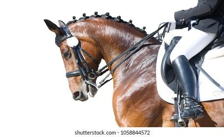 Equestrian sport portrait - dressage head of sorrel horse