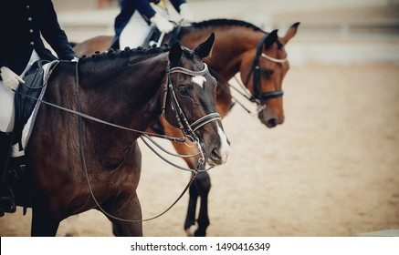 Equestrian sport. Portrait sports brown stallion in the double bridle. Dressage of horses in the arena.