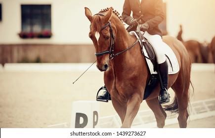Bridle Images, Stock Photos & Vectors | Shutterstock