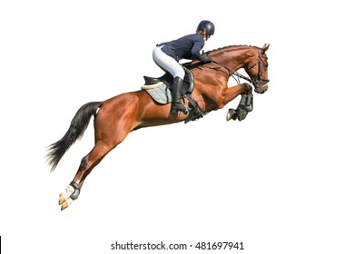 Equestrian sport: rider in jumping show (isolated on white)