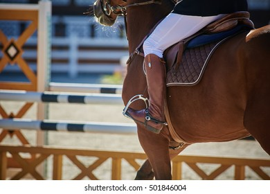 The Equestrian Sports