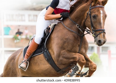 Equestrian Sports, Horse jumping, Show Jumping, Horse Riding