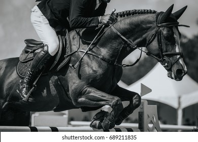 Equestrian Sports, Horse Jumping, Show Jumping Event