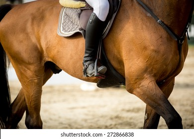 Equestrian Sports, Show Jumping themed photo.