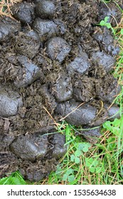 Equine dung on the grass